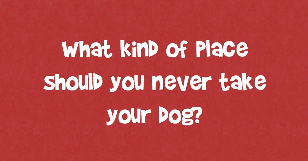 What Kind Of Place Should You Never Take Your Dog?