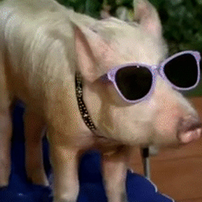 Where Do You Remember This Pig From?