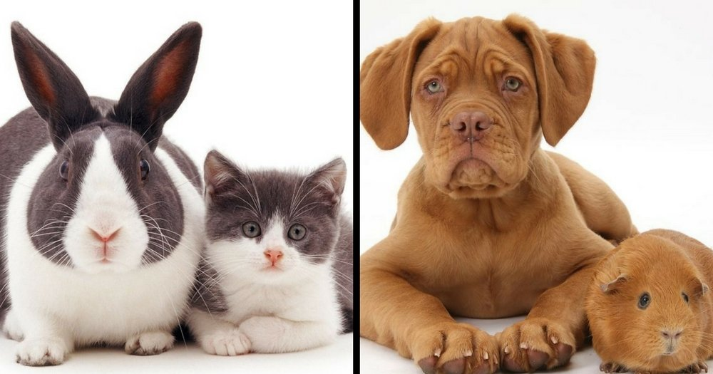 This Photographer Shoots Pictures Of Animal Brothers From Other Mothers And It's Too Cute!