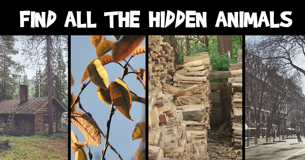 Can You Find the 5 Hidden Animals?
