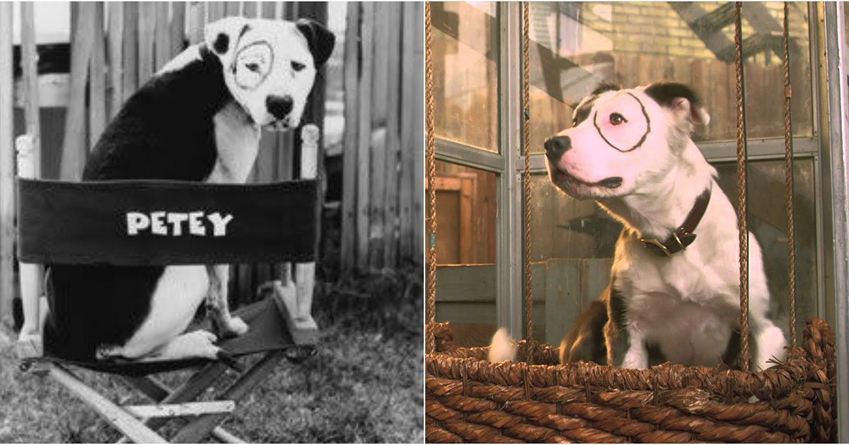 The Little Rascals Dog