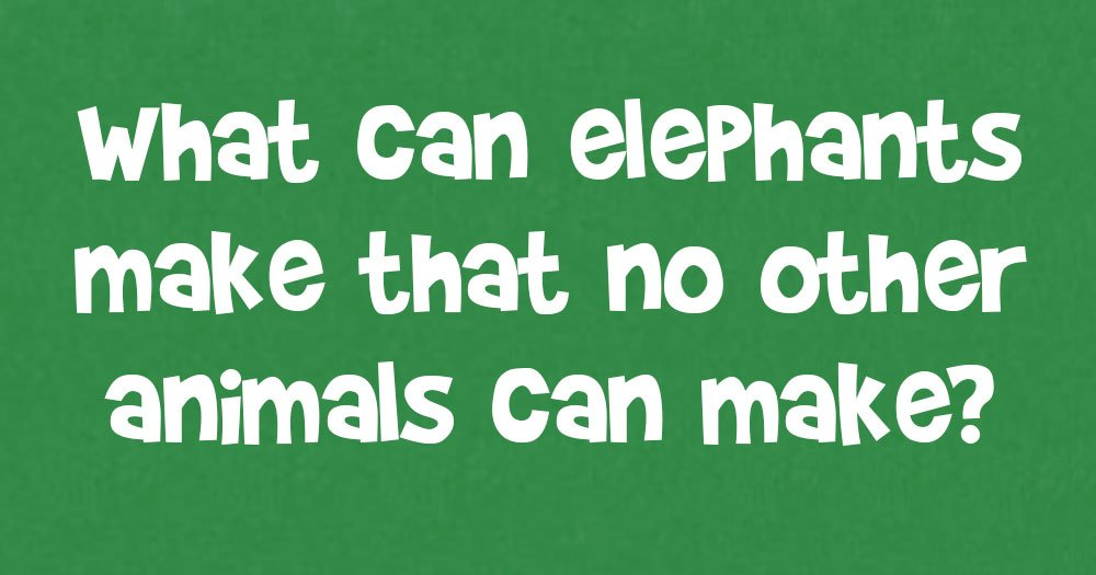 What Can Elephants Make that No Other Animals Can Make?