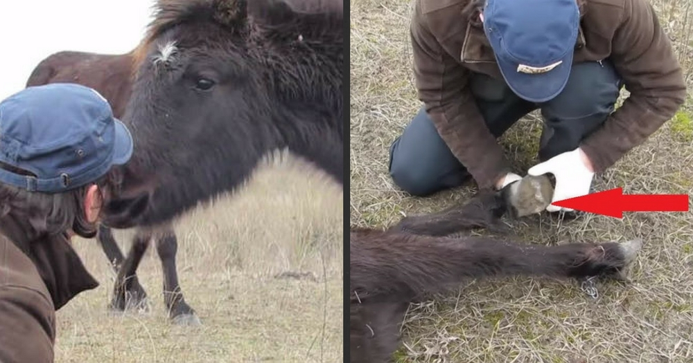 Man Saves Wild Horse With Chained Legs And Moments Later Horse Thanks Him In An Incredible Way