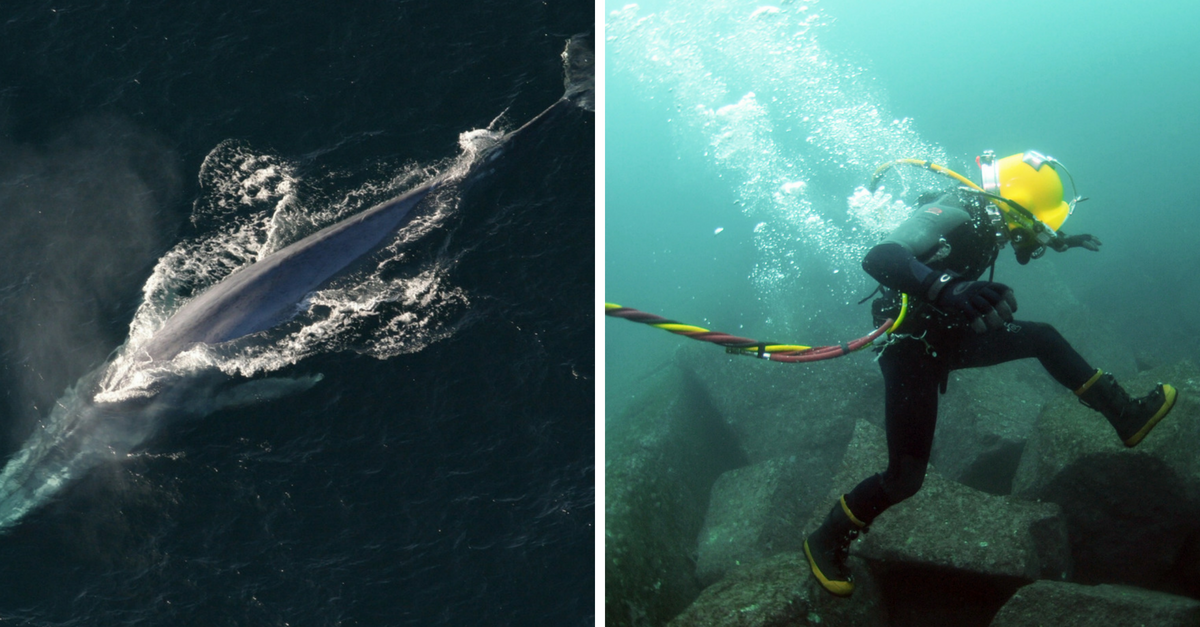 4 Mysteries Of The Ocean Scientists Still Can't Explain