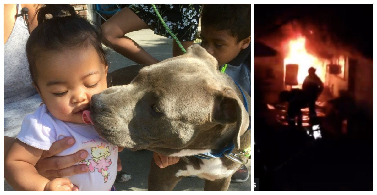Pit Bull Notices House Fire Before Owner So She Rushes Inside To Save 8-Month-Old Baby Girl
