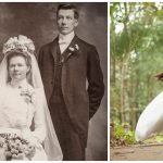 vintage wedding advice