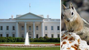 white-house-pets