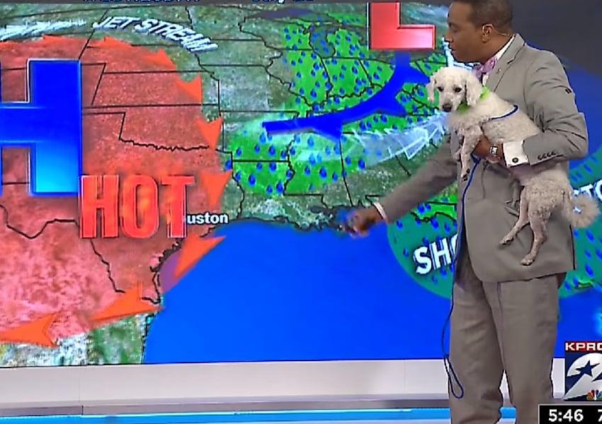 dog weather man