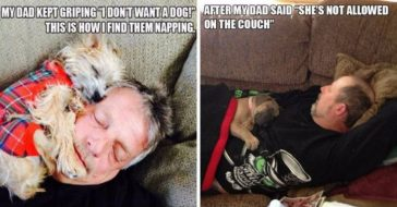 dads-dogs