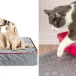 pet-products