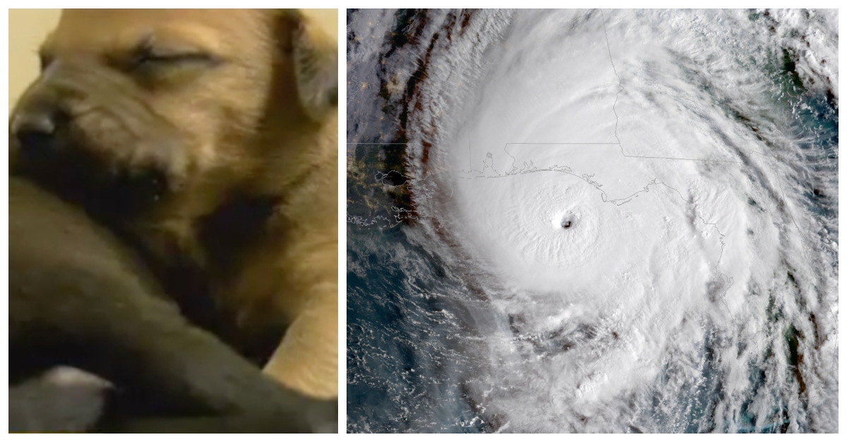 Naples Humane Society Rescues 46 Dogs Just Before Hurricane Michael Makes Landfall