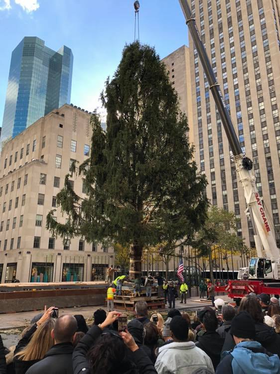 2018 tree