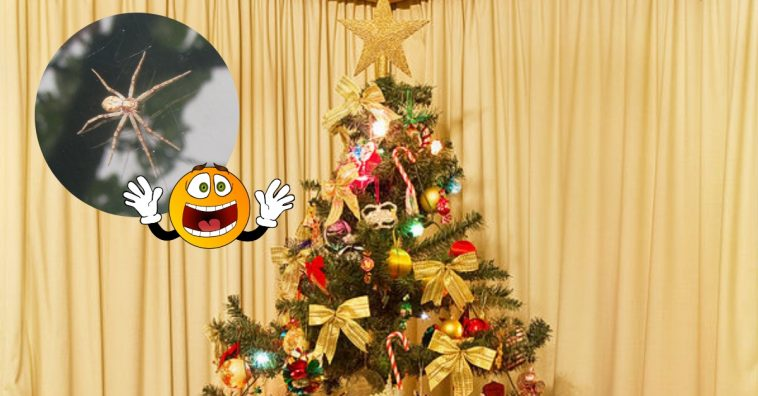 Bugs In Christmas Trees.There Could Be 25 000 Bugs Living In Your Christmas Tree