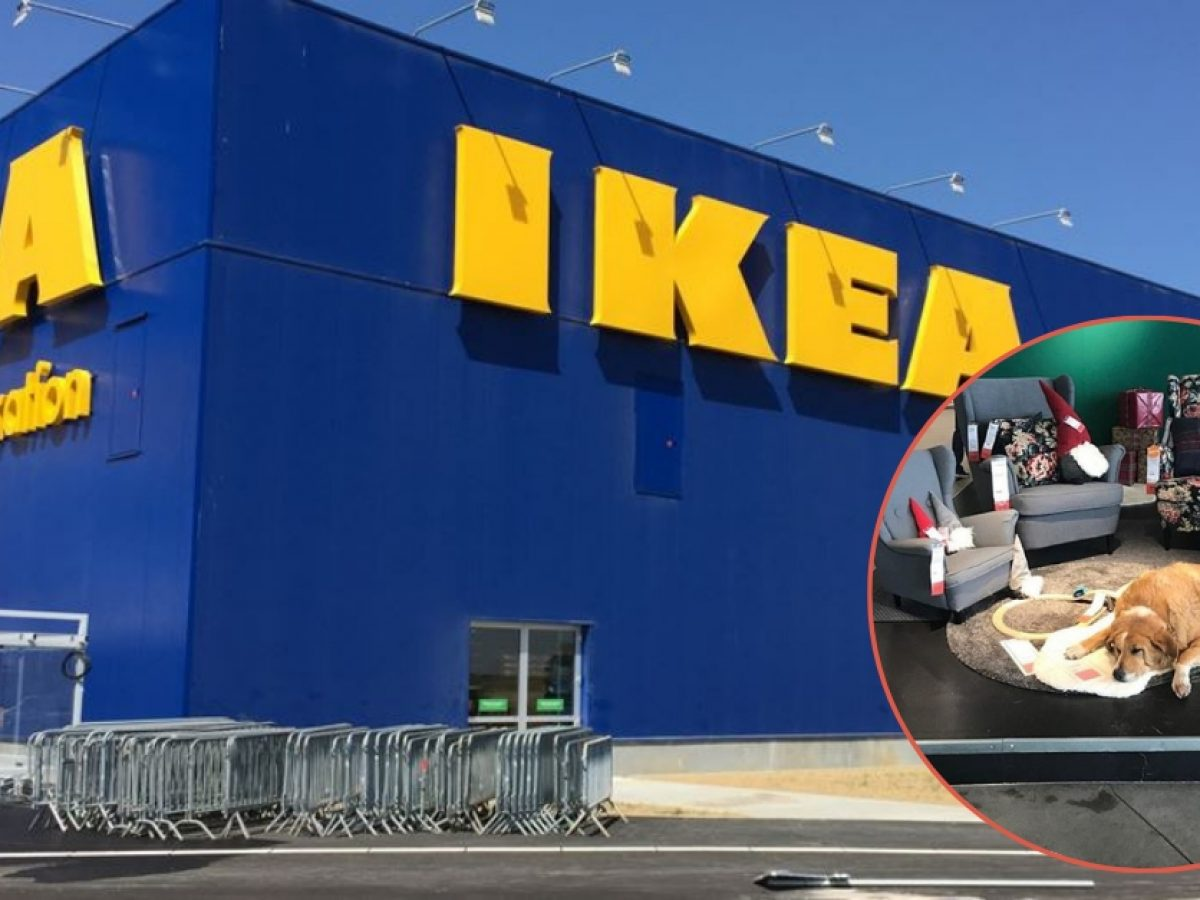 Ikea Opens Their Doors To Keep Dogs
