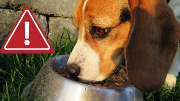 dog-food-recall