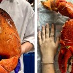 costco-lobster-claw