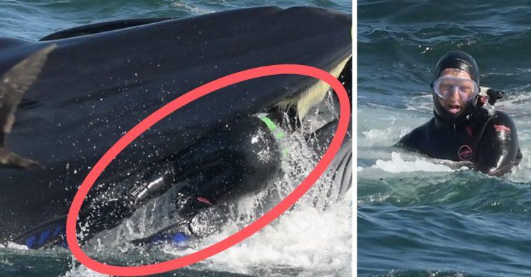 Eaten By Whale 758x396 - Sedang Cari Ikan Sarden, Ilmuwan Ini Malah Ditelan Ikan Paus
