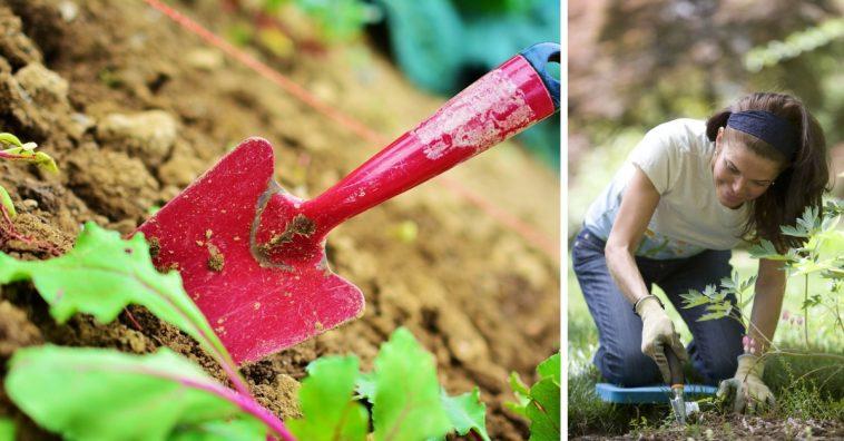gardening-health