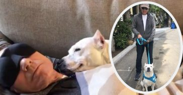patrick stewart foster dog