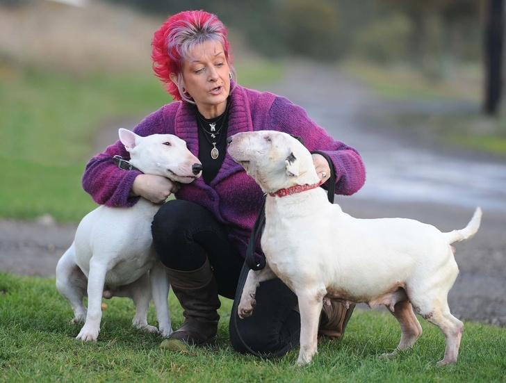 Liz Haslam and her Beds for Bullies dogs