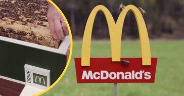 Sweden designed the worlds smallest McDonalds for bees