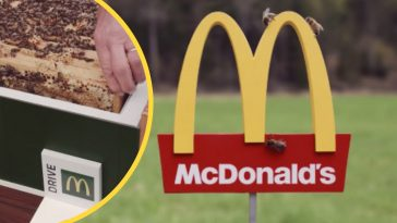 Sweden designed the worlds smallest McDonalds for bees