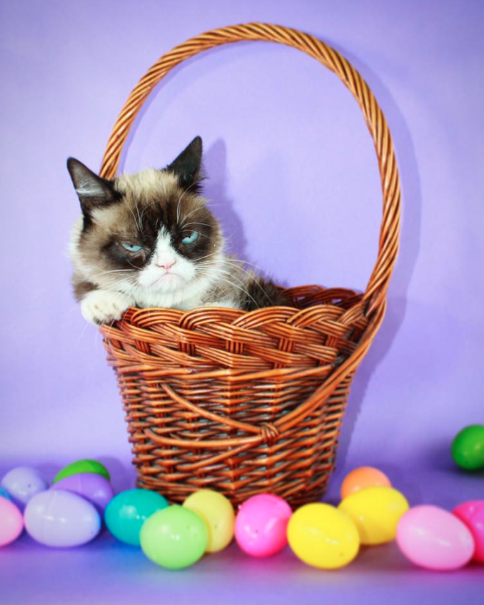 Grumpy Cat on Easter 2019