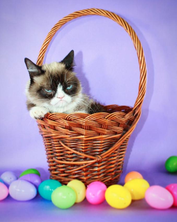 Grumpy Cat on Easter 2019
