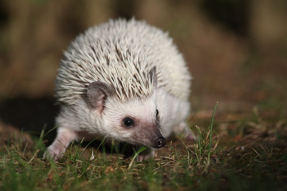 Queen's Longtime Guitarist Brian May Helps Save Hedgehogs In His Free Time