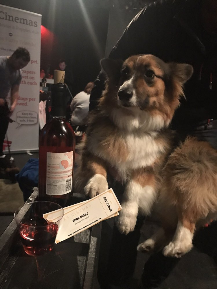 Texas Movie Theater Allows You To Bring Your Dog And Drink Bottomless Wine For $15