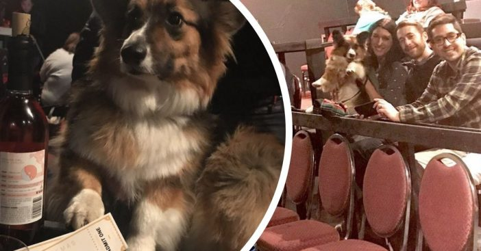 movie theater allows dogs and unlimited wine