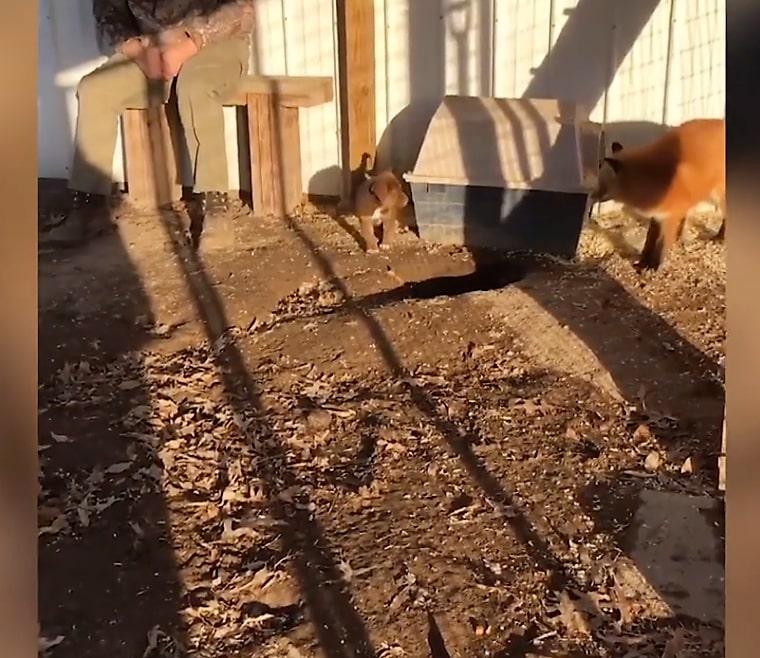 phoenix copper playing