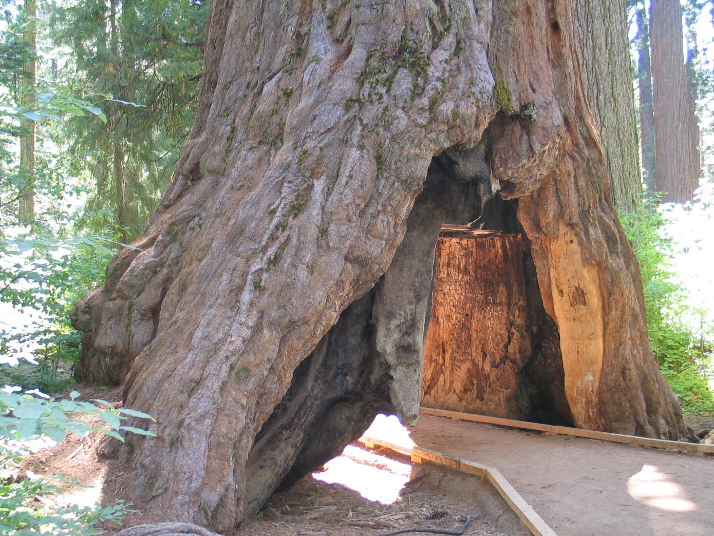 tunnel tree