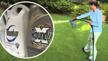 weed killer causes cancer trial