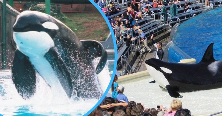 illegal to hold dolphins and whales in captivity