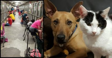 people comfort scared shelter animals on 4th of july
