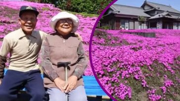 Husband Spends Two Years Planting Thousands Of Flowers For His Blind Wife