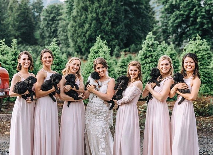 bridal party carrying puppies instead of bouquets