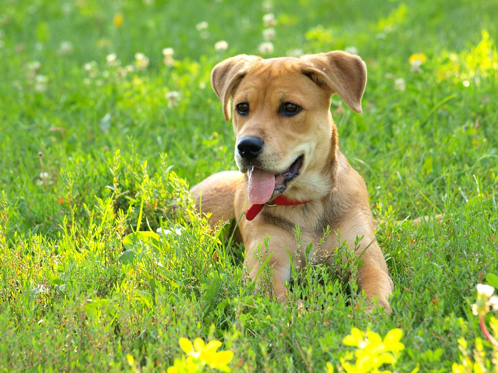 dog sitting in the grass