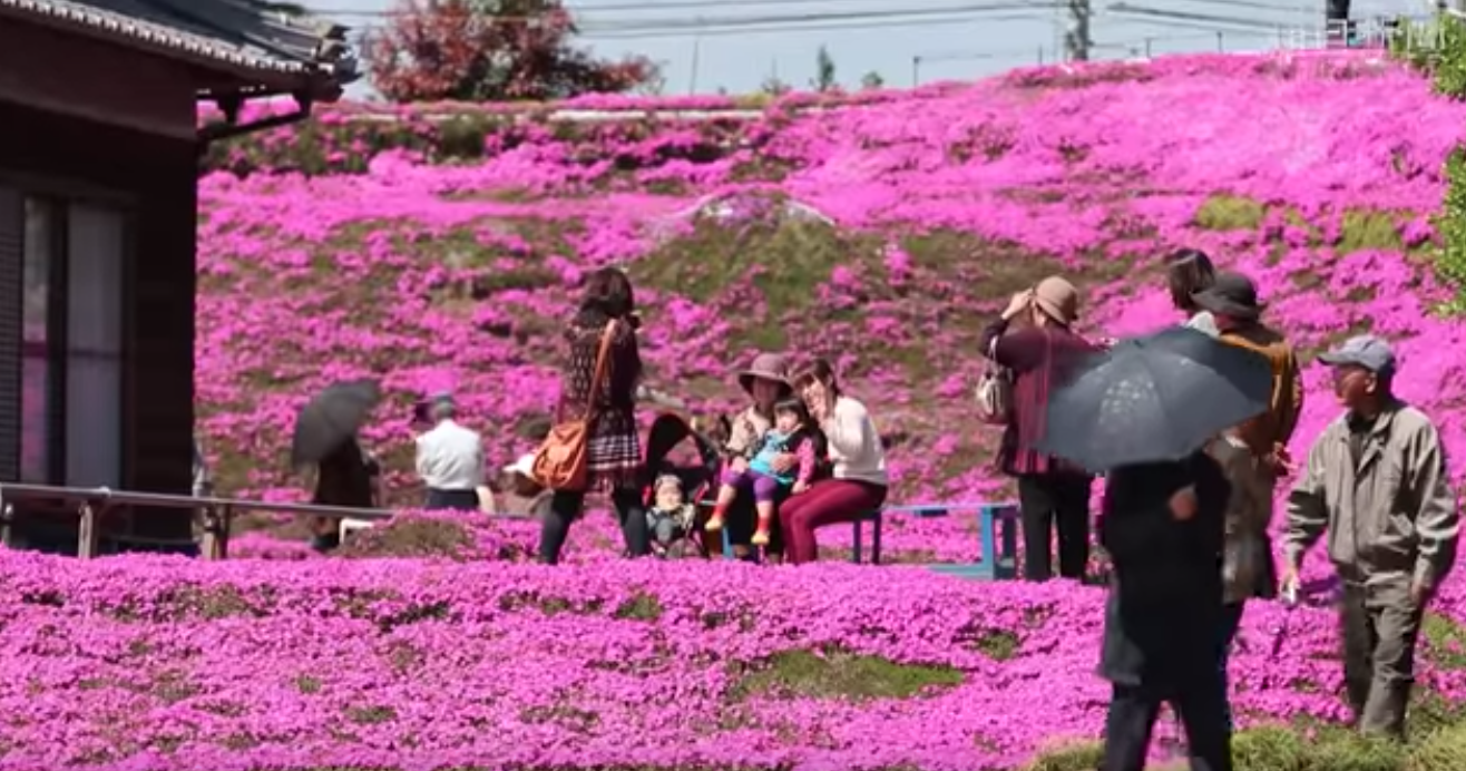 man plants thousands of flowers for his blind wife