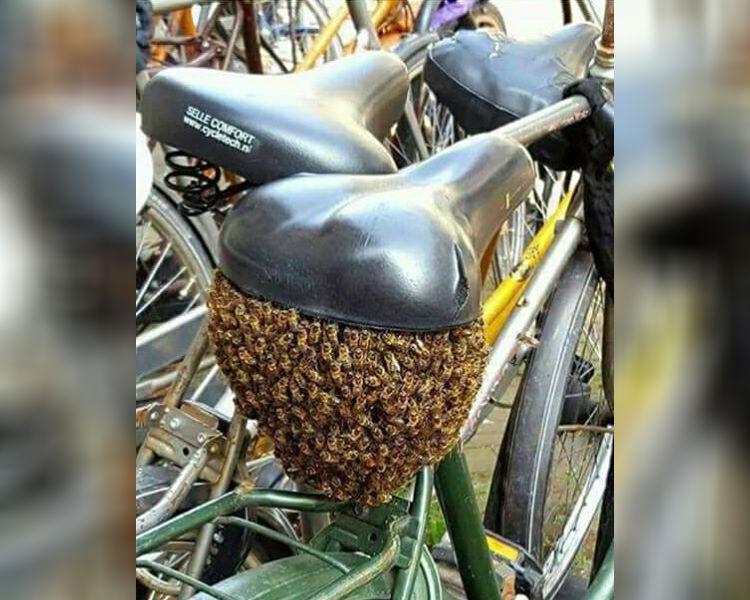 swarm of bees under bike seat