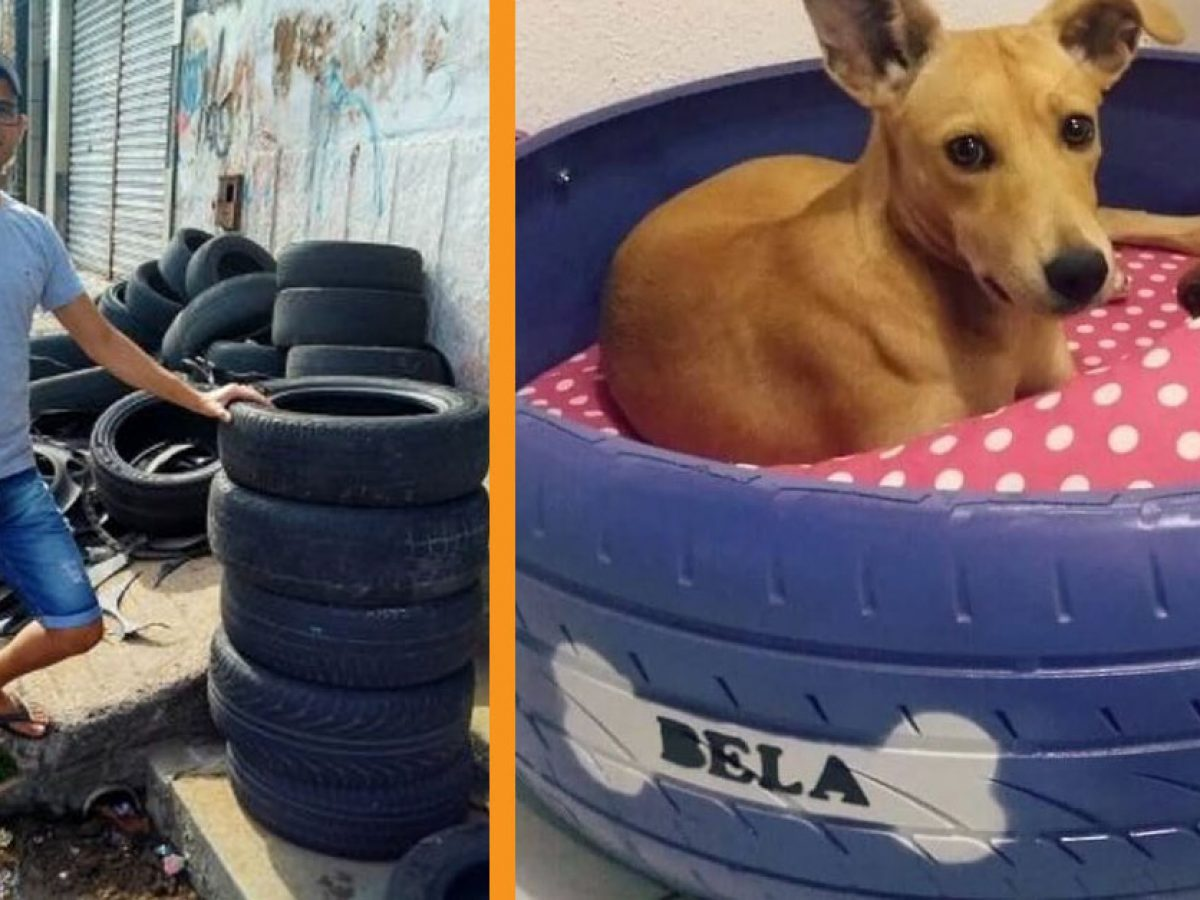 Old Car Tires Into Beds For Stray Animals