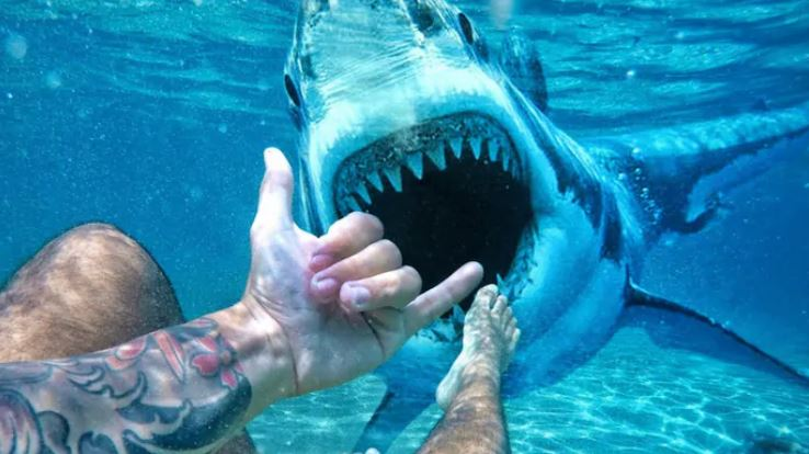 underwater with a shark