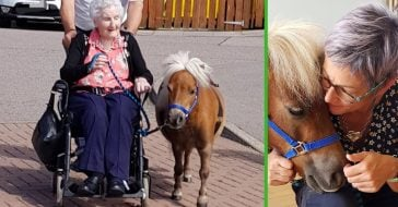 A couple brings therapy ponies to hospice care places to help patients with dementia