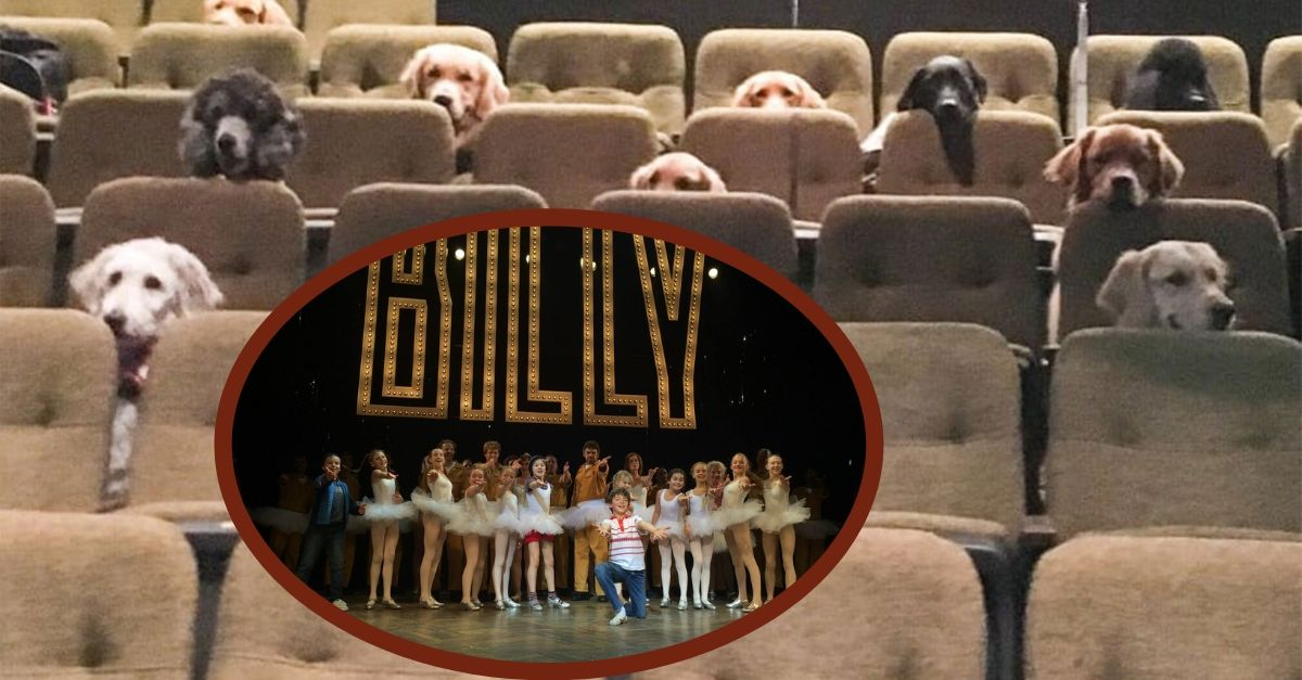 Service Dogs Enjoy A 'Billy Elliott' Performance And It's Absolutely Adorable