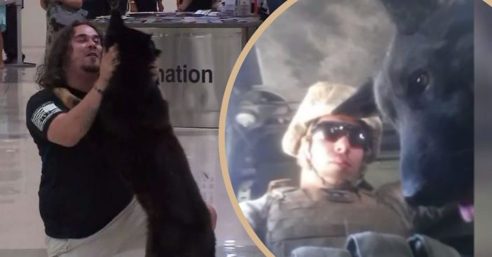 U.S. Marine Reunites With Military Dog After Years Of Being Apart And Adopts Him