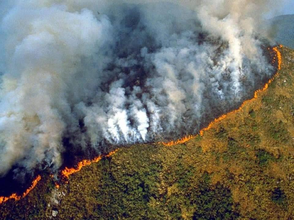 amazon rainforest fires in brazil