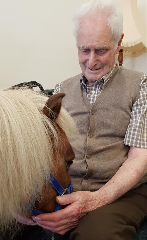 petting pony