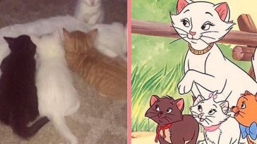 Cat Named Duchess Gives Birth To The Rest Of 'The Aristocats'