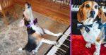 Buddy Mercury is a singing rescue dog